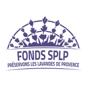 Logo fonds lavande splp